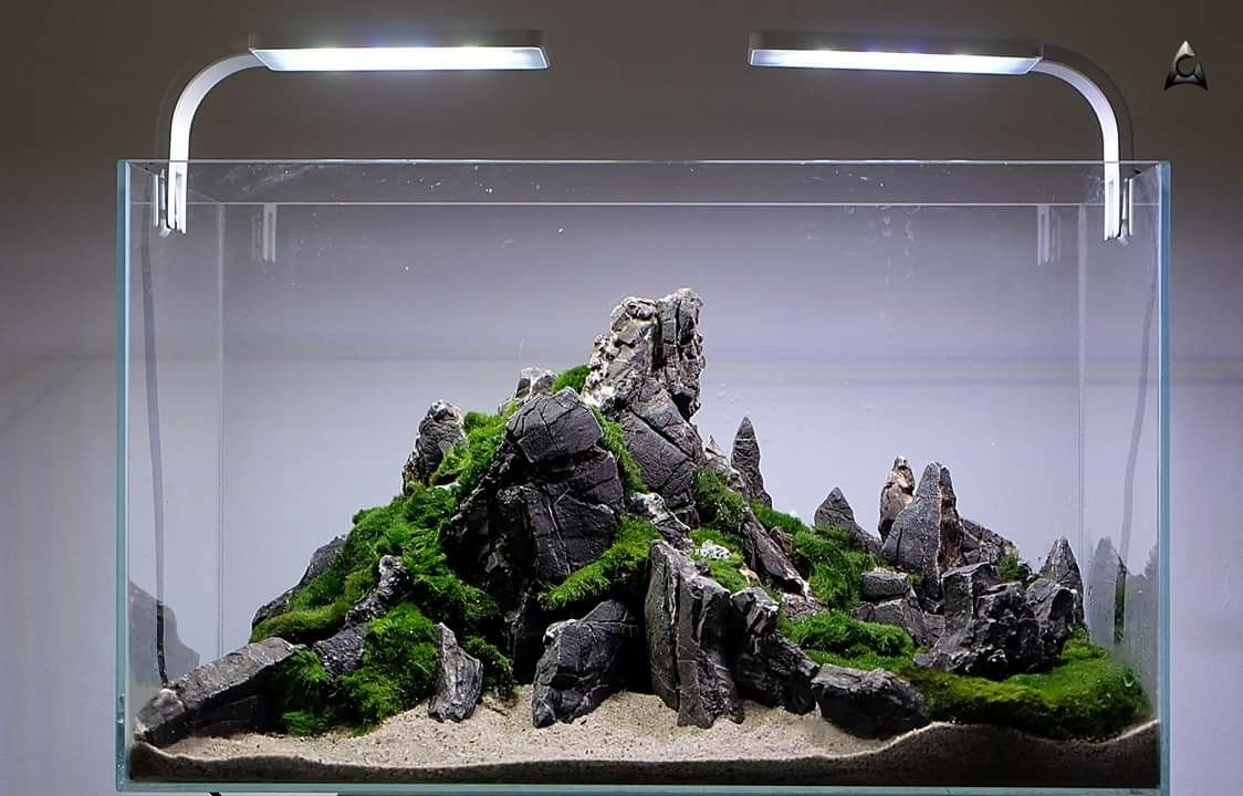 Iwagumi Aquascape Ikan Akuarium Akuarium Aquarium