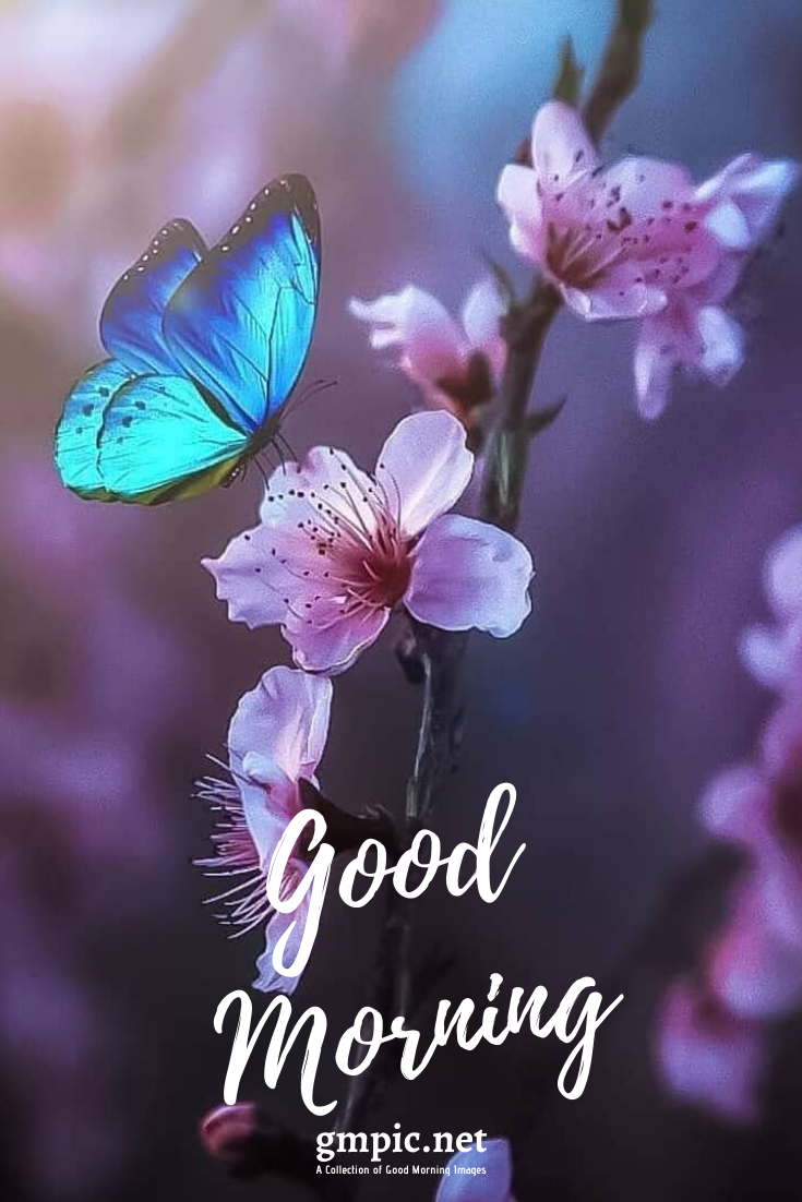 100 Good Morning Images And Wallpaper Download In Hd Flowers Good Morning Imges Good Morning Images Morning Images Good Morning Quotes