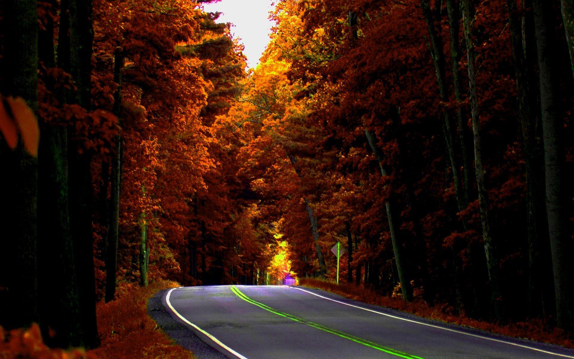Autumn Road Wallpaper