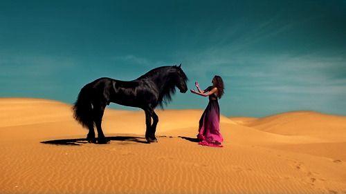 Vivir En Mexico Horses Pretty Horses Sinaloa