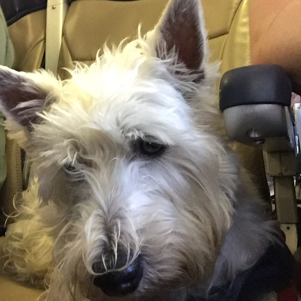 Too Bad I Can T Stay In The Airplane Seat Mom Says I Have To