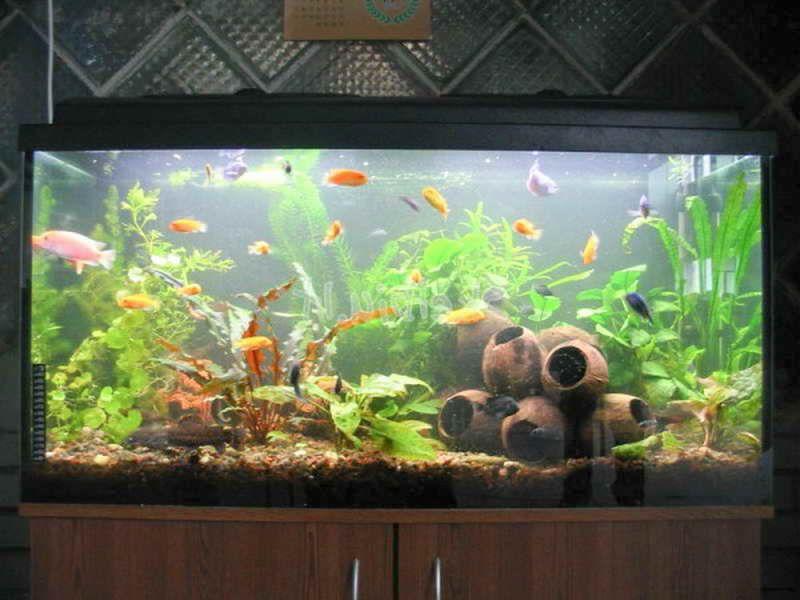 1000+ Images About Aquarium On Pinterest | Super Mario Bros, Fish