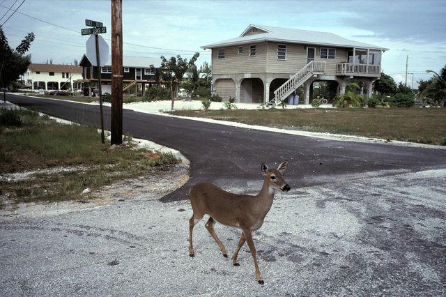 Alex Webb, 'Big Pine Key, Florida,' 1991, Aperture Benefit Auction 2014
