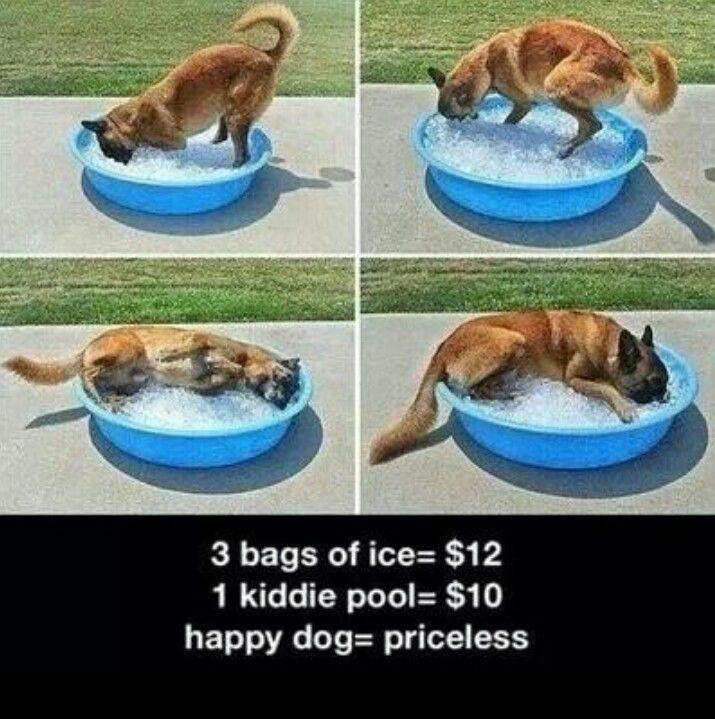 Keep your pet cool