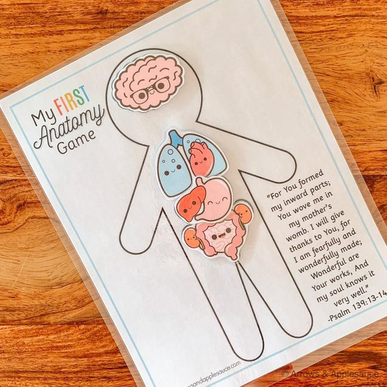 Anatomy Game, Printable Human Body Preschool Activity ...