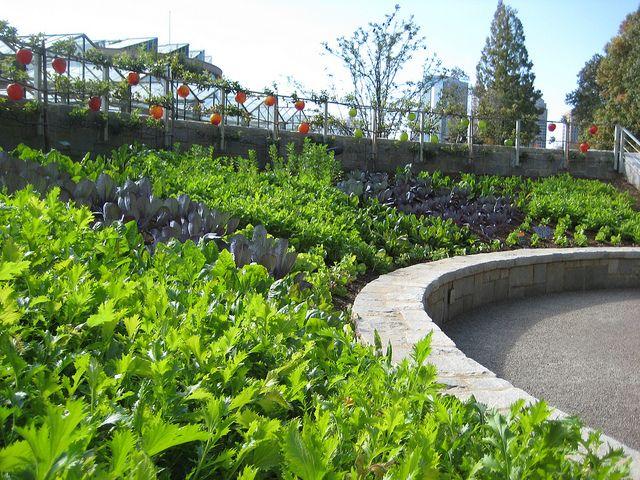 Edible Garden Edible Landscaping Edible Garden Community Gardening
