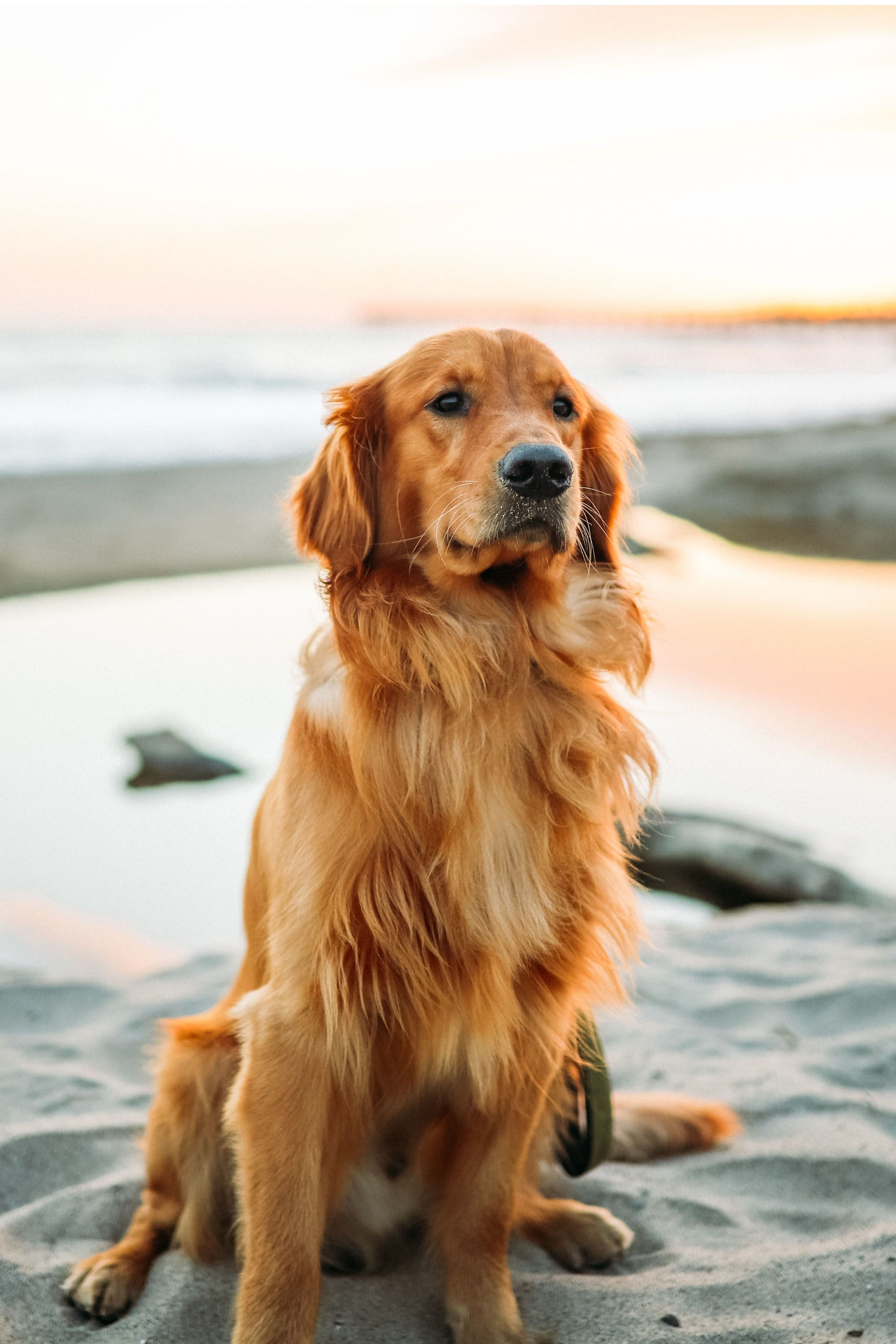 The Truth About Dog Sunscreen In 2020 Cute Dog Wallpaper Cute Dog Pictures Dog Wallpaper
