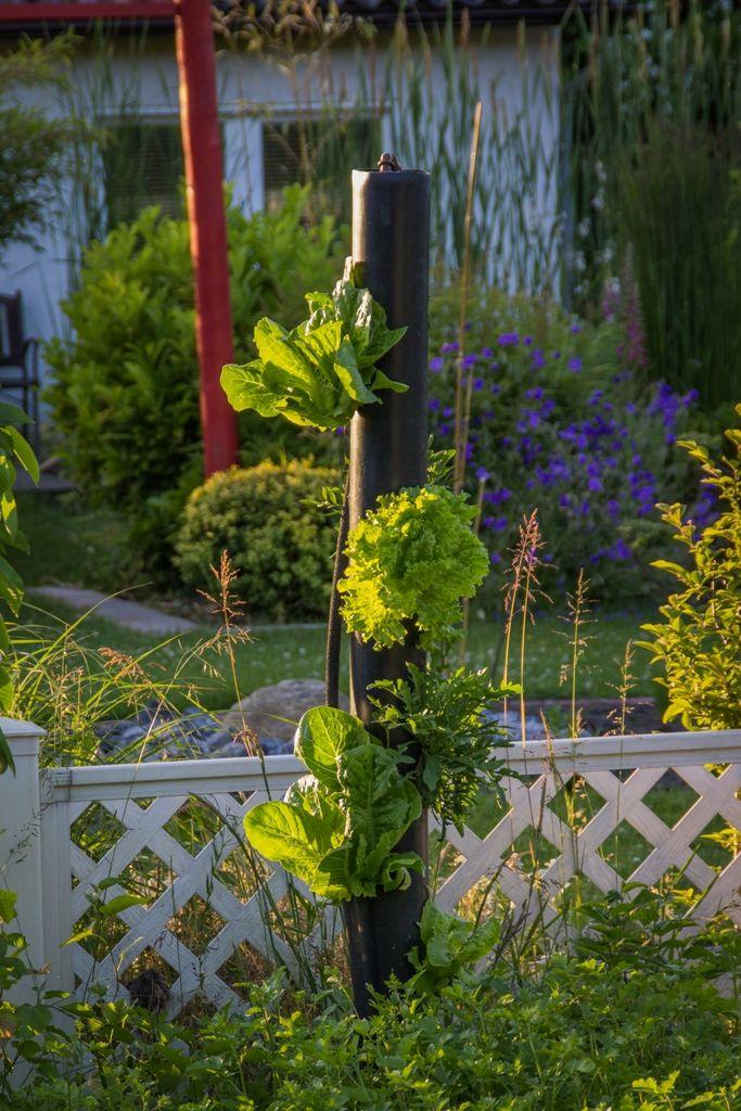 Ideal Salatbaum mit automatischer Bew sserung GartenIdeenGardenIdeas