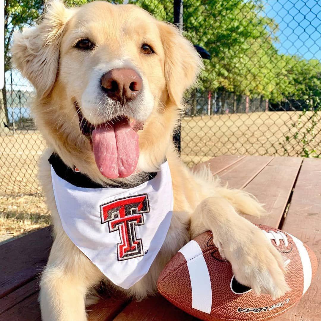 Florida State Seminoles Dog Bandana X-Large: 20-24 inches