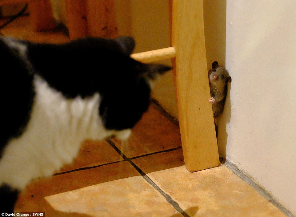 This Incredible Photo Shows A Real Life Tom And Jerry Moment As A Clever Mouse Evades The
