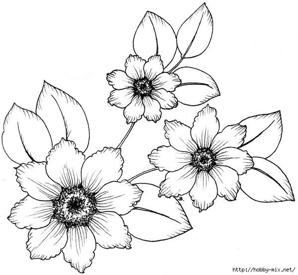 картинки цветы рисунки