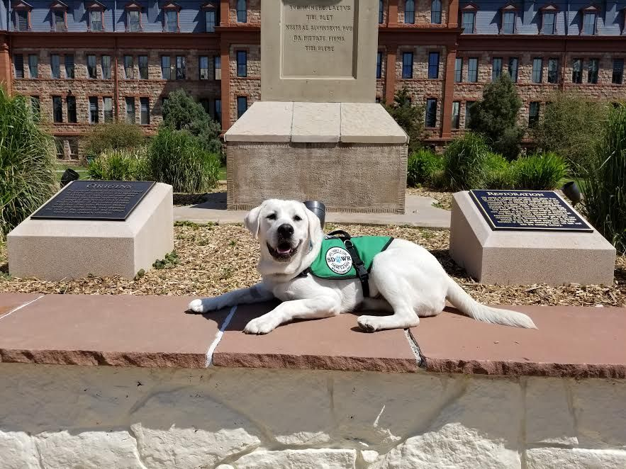 Shelby Diabetic Alert Dog Reporting For Duty At Fort Carson