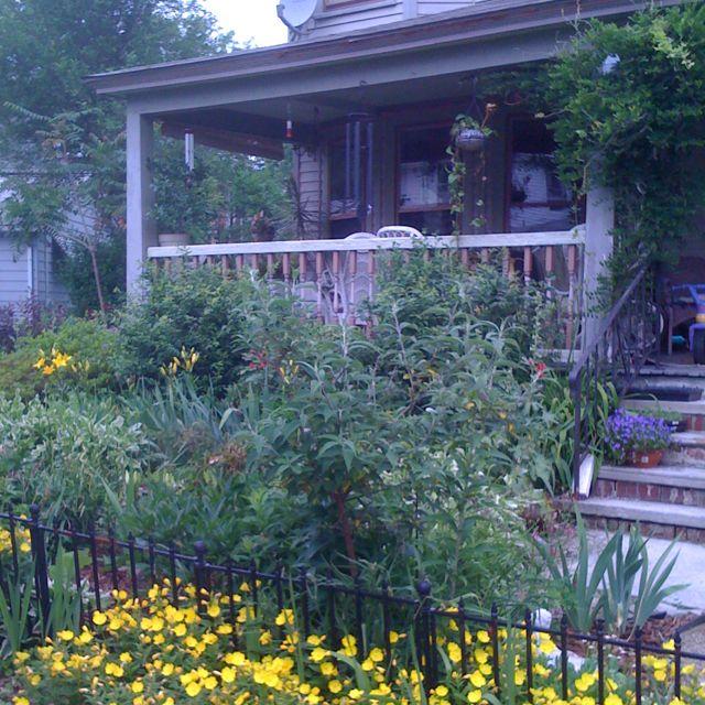 My no mow yard! | Backyard on No Mow Backyard Ideas id=33515