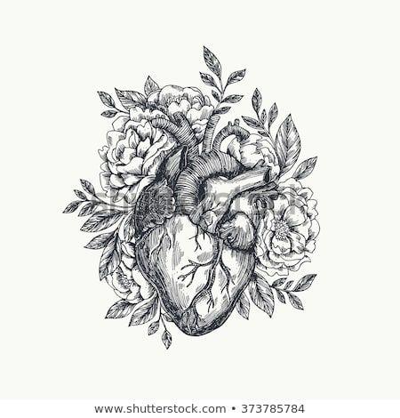 Photo of Valentinstag-Karte. Anatomisches Herz mit Blumen. Vektorgrafik Stock-Vektorgrafik (Lizenzfrei) 373785784