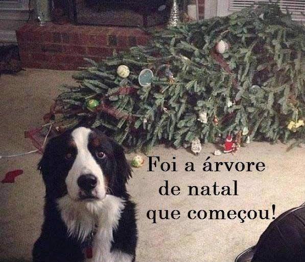 22 Natal Engracado Imagens E Gifs Com Frases Para Whatsapp Fotos De Animais Engracados Natal Memes Animais Bonitos