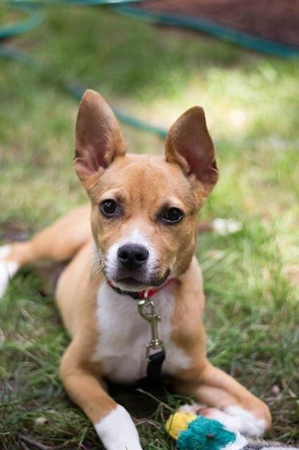 Adopt Gunther Sweet Petite 6 Month Old Dog And Cat Friendly