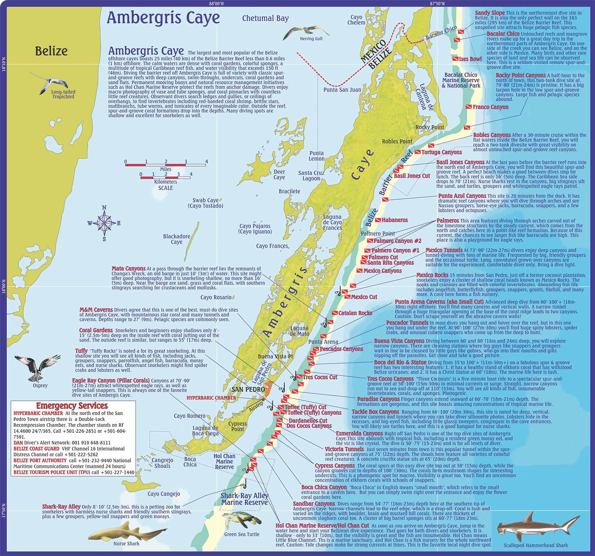 ambergris caye belize map Ambergris Caye Dive Maps Ambergris Caye San Pedro Caribbean And ambergris caye belize map
