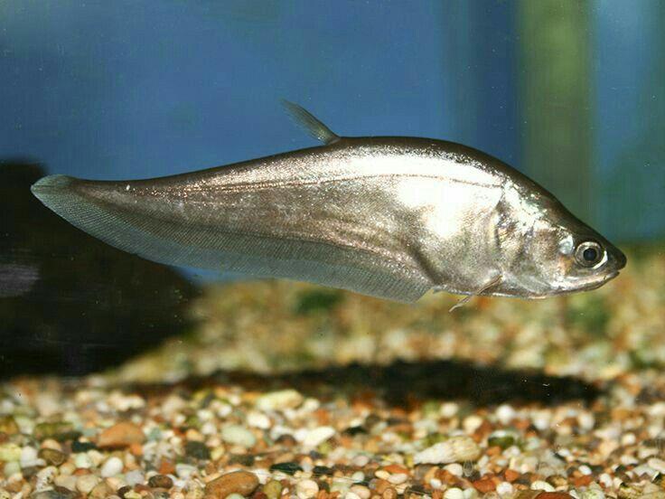 Amazing | Aquarium fish, Freshwater fish, Fish