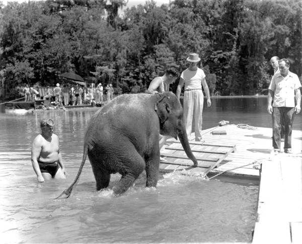 "Elephant during filming of ""Tarzan's Secret Treasure"" at Wakulla Springs - Wakulla Springs, Florida"