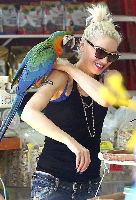 Gwen Stefani Buys A Pet Parrot For Sons See The Adorable Photos