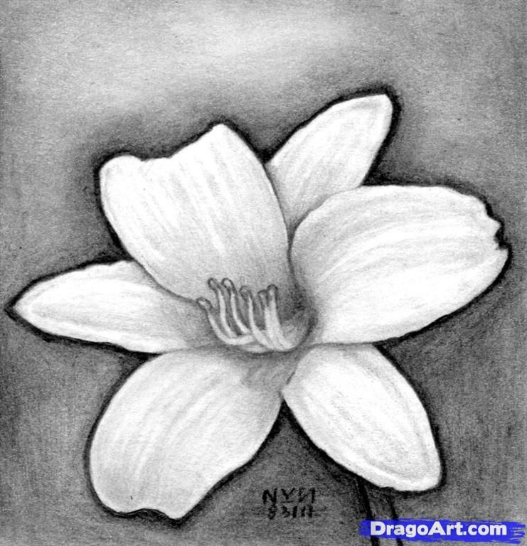 How To Draw A Realistic Flower Realistic Flower Drawing