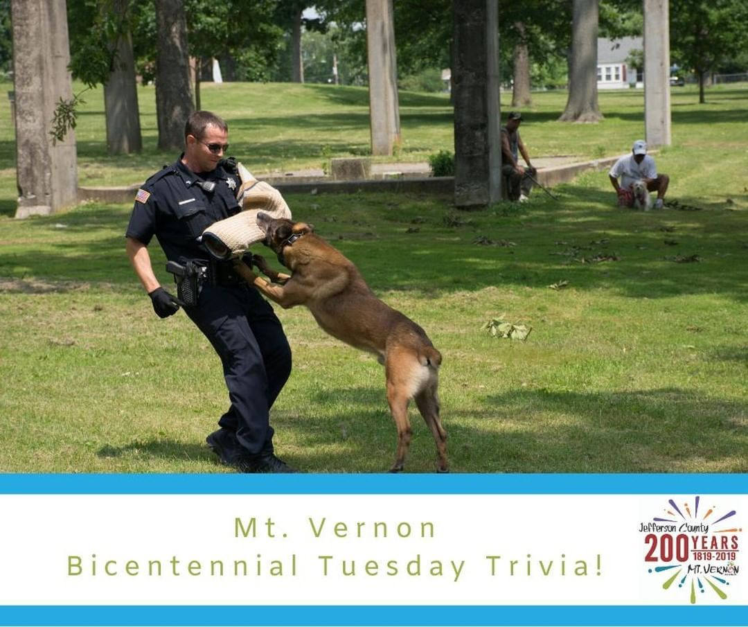 Did You Know The Mt Vernon Police Department K9 Division Was Established In 1978 Today There Effingham Illinois Bloomington Illinois St Louis Missouri