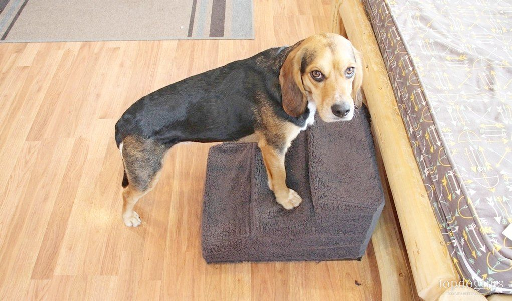 Review You Me Upsy Daisy Pop Up Pet Stairs Pet Stairs Dog