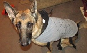 Pet Safety Tips on Halloween at AMothersShadow.com #pets #halloween