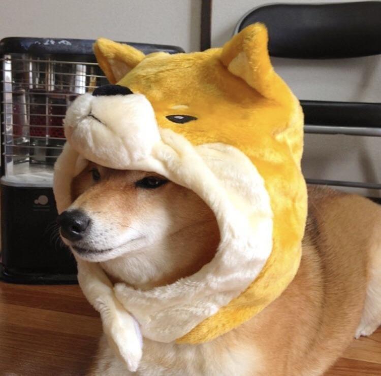 Nested doggo