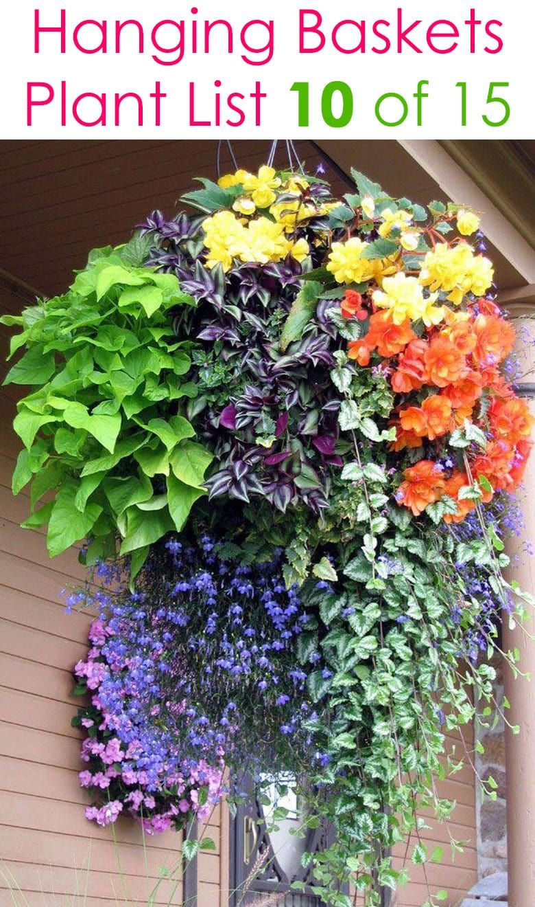 15 Beautiful Flower Hanging Baskets & Best Plant Lists is part of Hanging plants, Container flowers, Hanging flower baskets, Flower planters, Plants for hanging baskets, Hanging herbs - 15 beautiful hanging baskets with complete plant lists for each! Best hanging basket plants for sun or shade, & tips on growing hanging plants & flowers