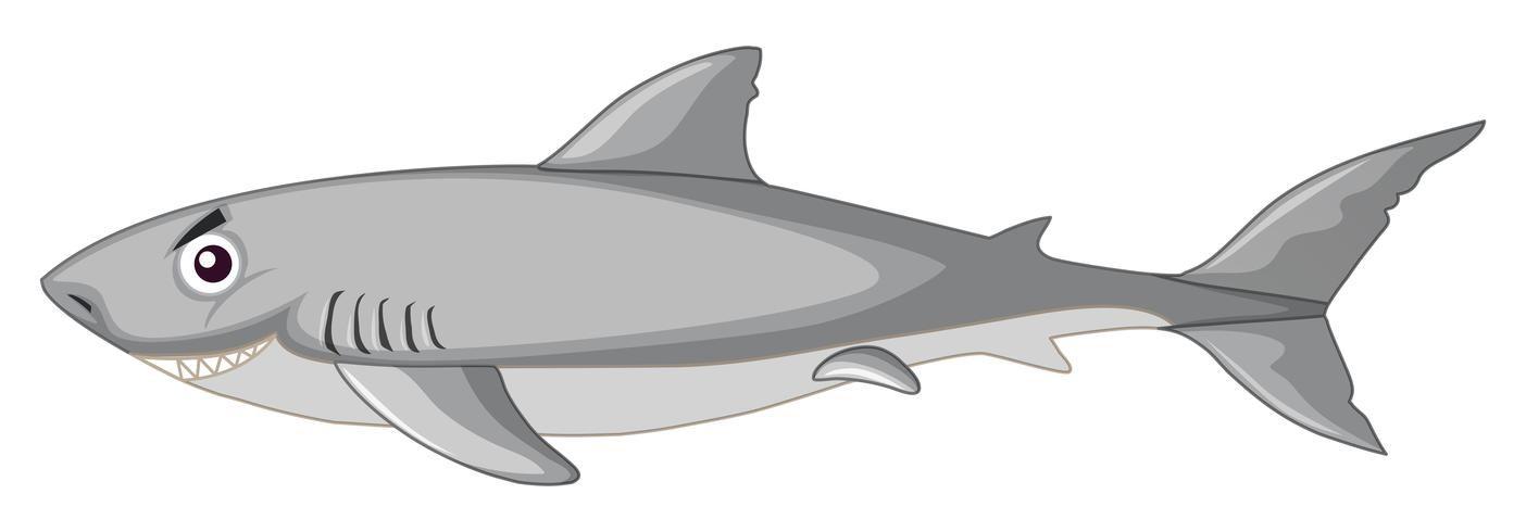 Un Requin Sur Fond Blanc En 2020 Dessin Crocodile Art Vectoriel Requin