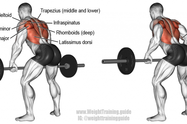 Bent-over barbell row exercise | back exercises ...
