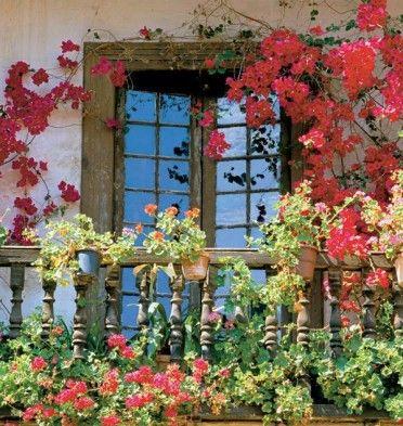 Kwiaty Na Sloneczny Balkon Wybieramy Kwiaty Na Balkon Poludniowy Urzadzamy Pl Plants Green Balcony