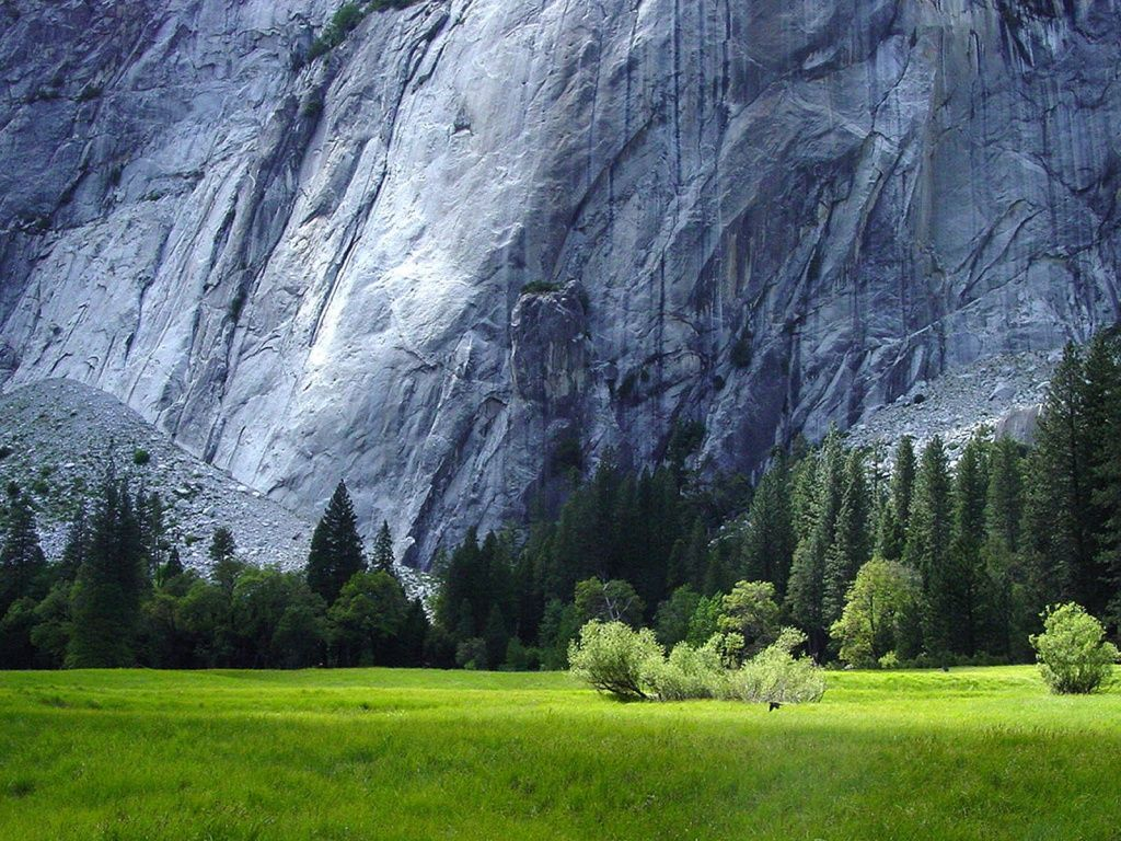 rocks grass forest yosemite hd desktop wallpaper | places