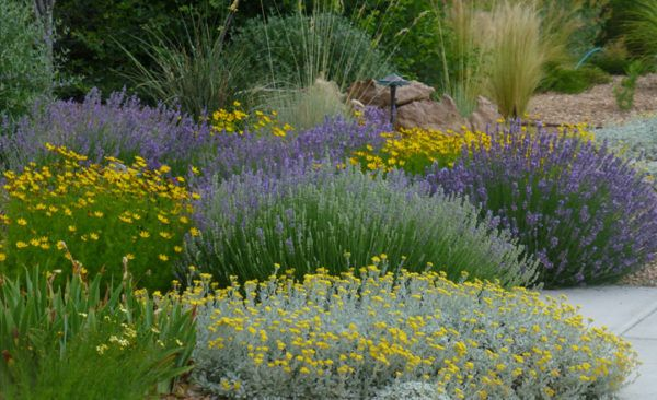 my favorite plant combinations