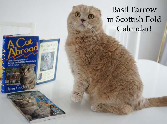 Scottish Fold Kittens For Sale Columbus Ohio Gastronomia Y