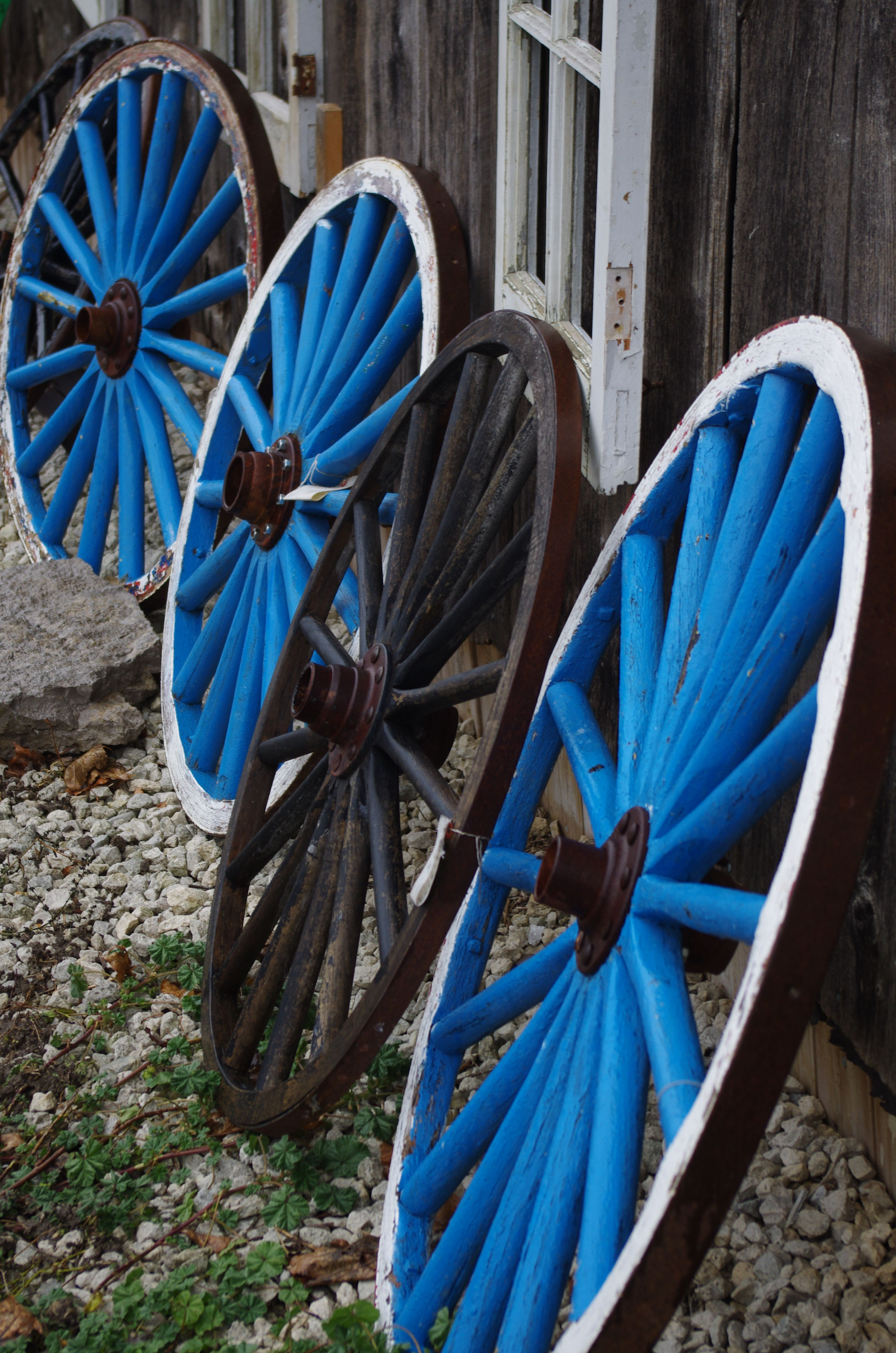 Odd wheel out. Photo by Cheryl Meyer