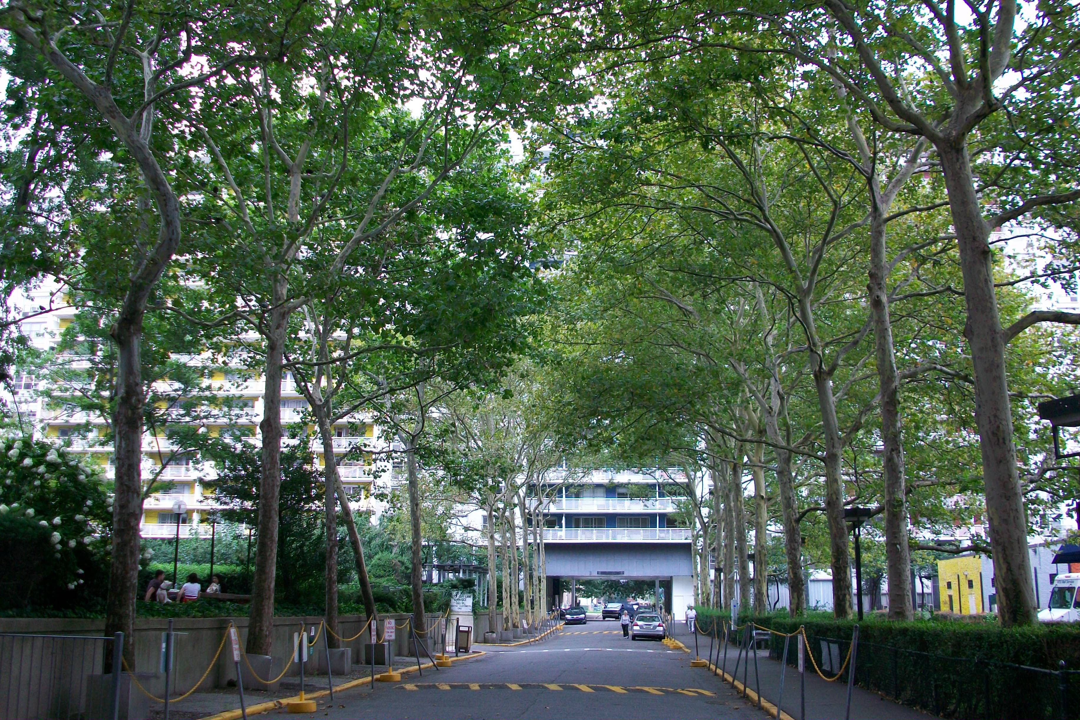 What are the 10 most common street trees in New York City