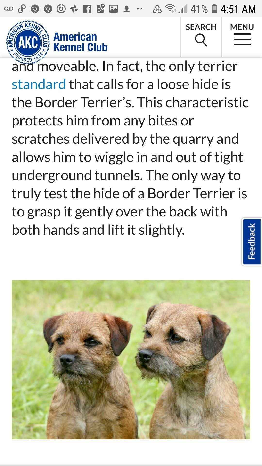 Pin By Cheryl Sherman On Dog Care Dog Care Border Terrier Terrier