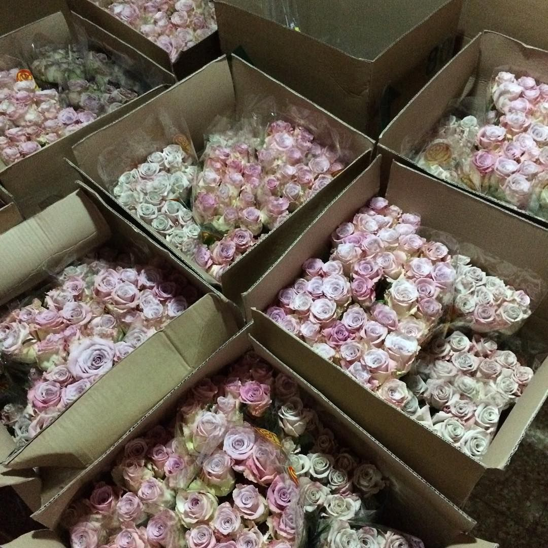 Our arrangements #bellinitravel #venice are going to look dreamy as Team Lycett start weaving floral fabulousness #simonsaysflowers