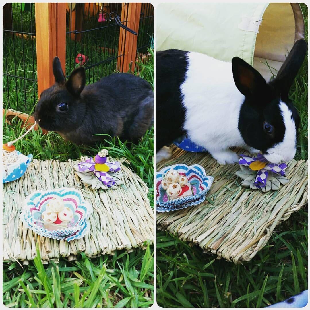 Pin on Pet Rabbit DIY Toys and Treats