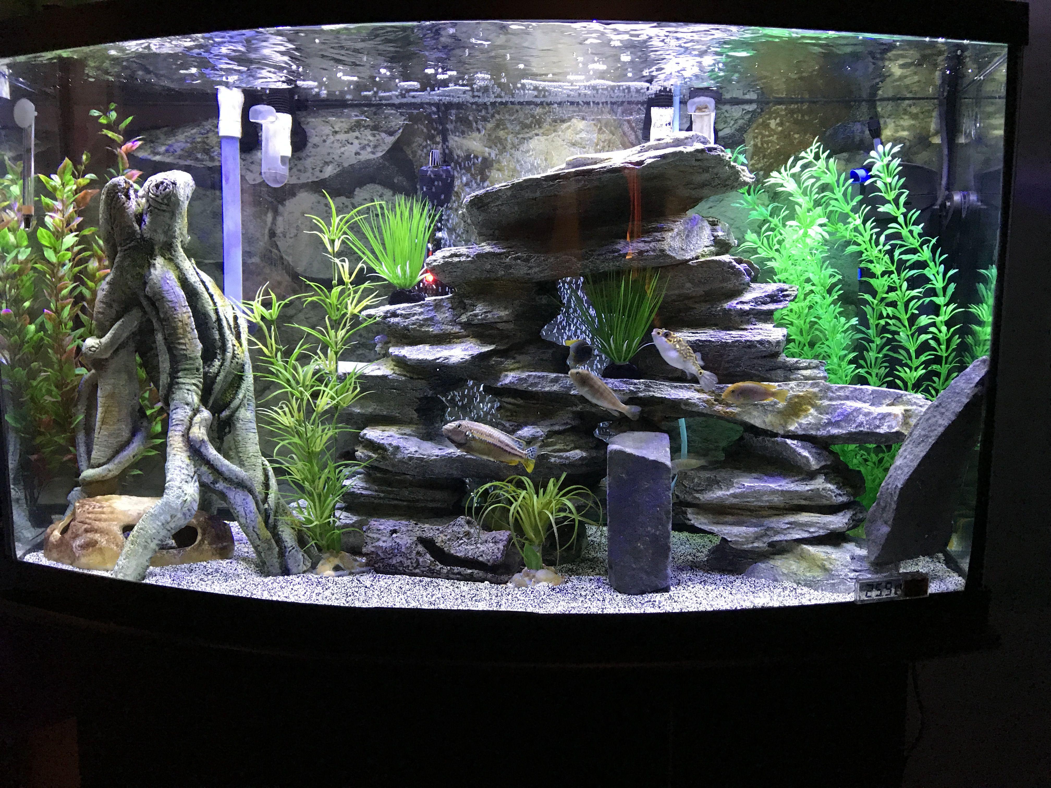 Unique De Meuble Pour Aquarium Concept