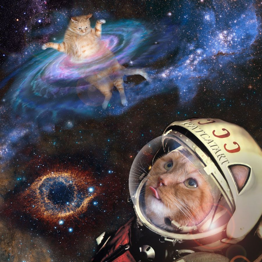 "fatcatartru: "" Zarathustra the space cat, a his first flight with Yuri…"