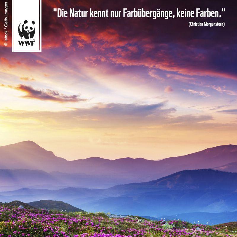 Zitat Zum Sonntag Die Natur Kennt Nur Farbubergange Keine