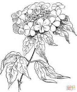 realistic flower coloring pages - Bing Images | flowers coloring ...