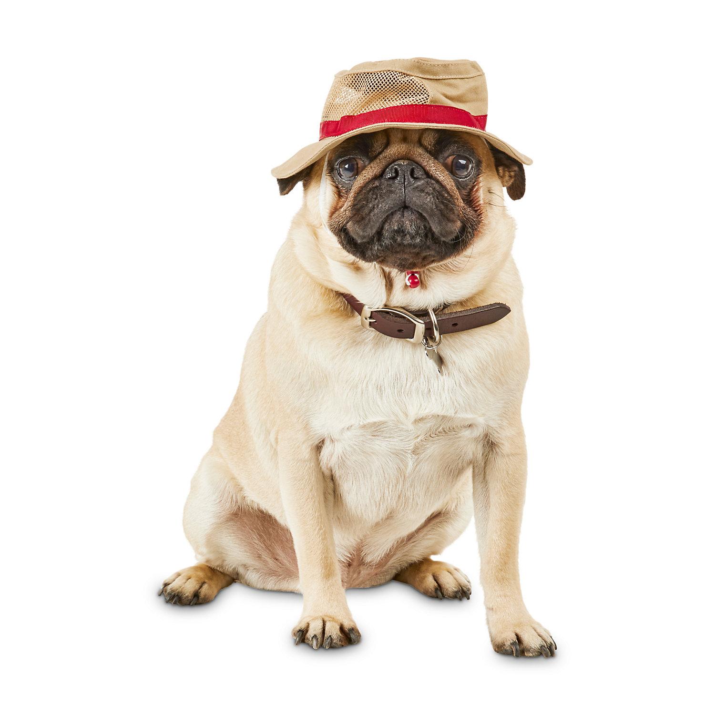 Bond Co Bark Ranger Bucket Dog Hat Small Medium With Images Dog Hat Dogs Petco