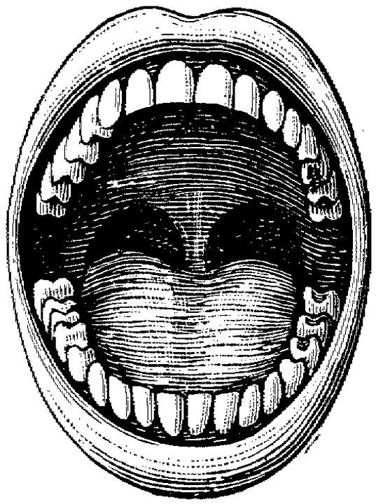 Open Wide Avidflosser Mouth Drawing Open Mouth Drawing Free Clip Art