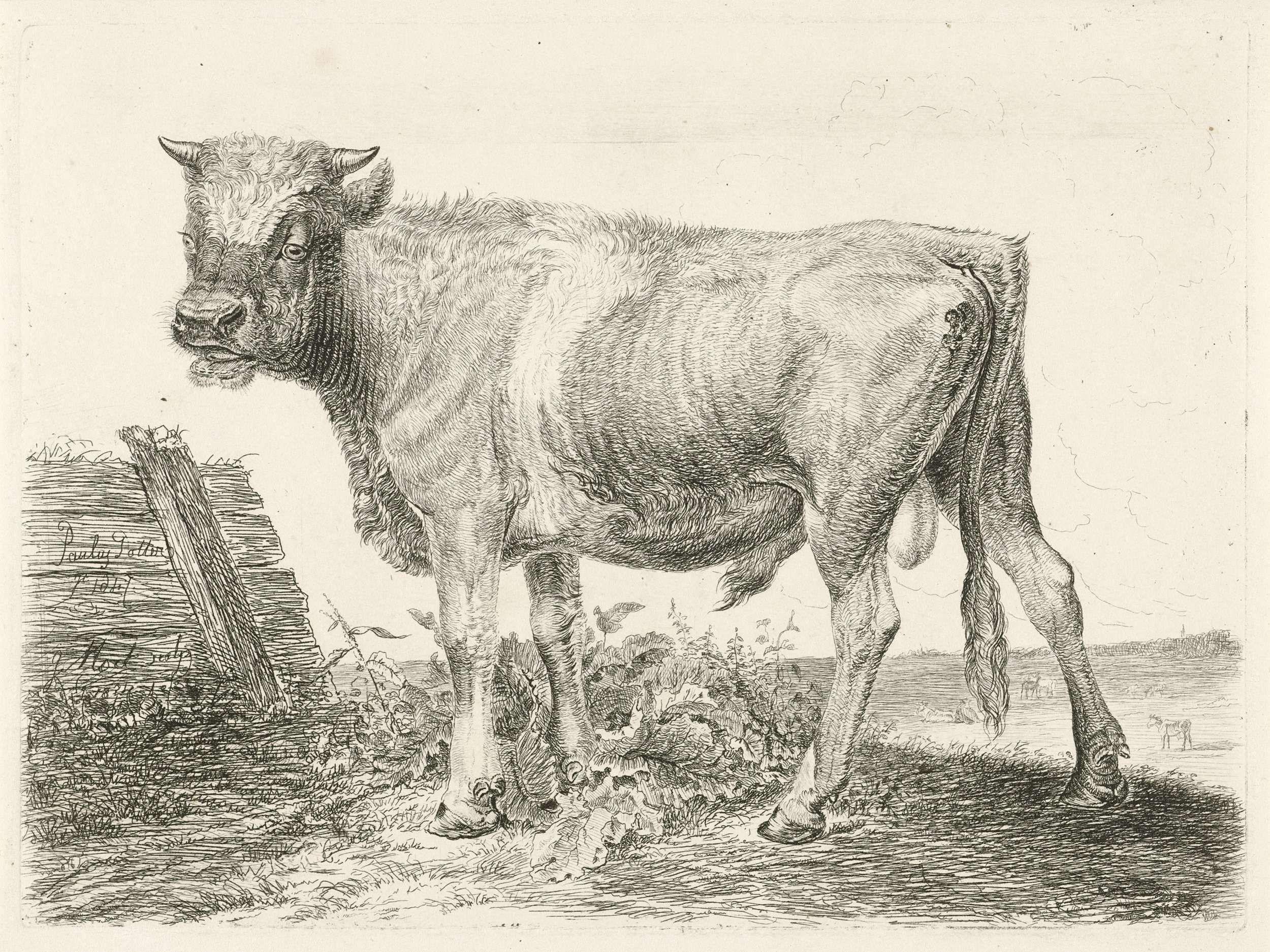 Johannes Mock | Stier, Johannes Mock, 1824 |