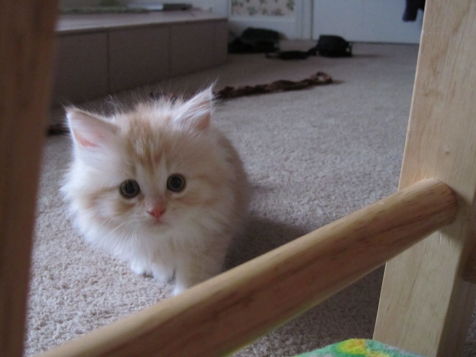 The cutest kitten EVER Her name is Eevee Too bad she was not