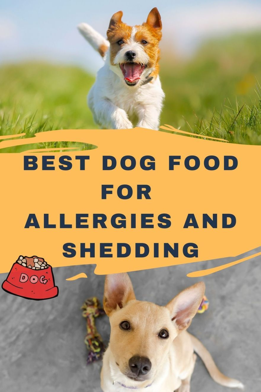Best dog food for allergies and shedding updated 2020
